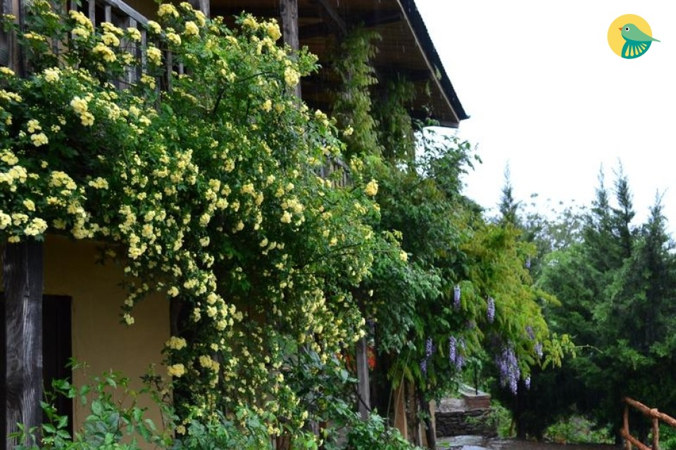Cottages With Natural Beauty
