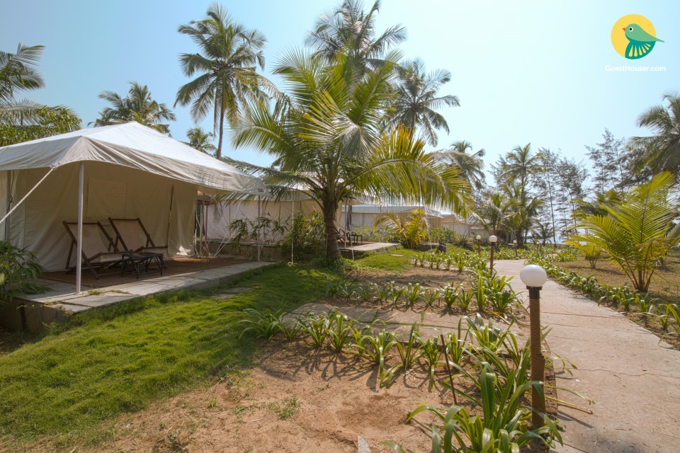Lavish tent stay near the beach, with a pool