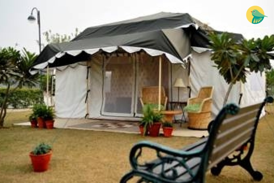 Stay in Comfortable Tent