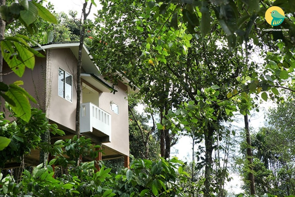 Cosy stay amidst tropical groves