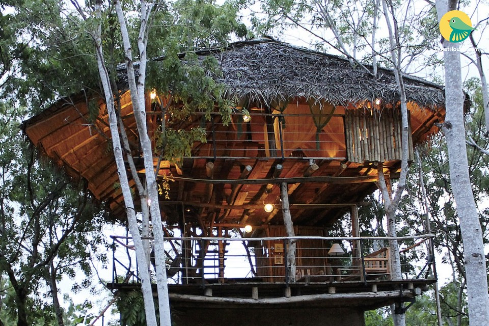 An amazing experience in tree house