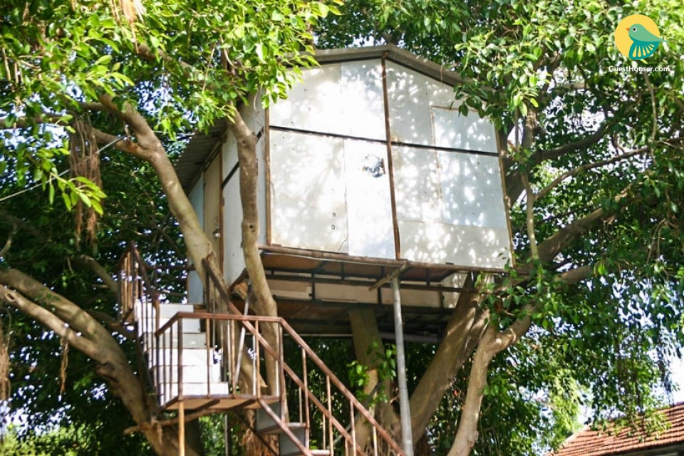 Feel the nature in a Tree House