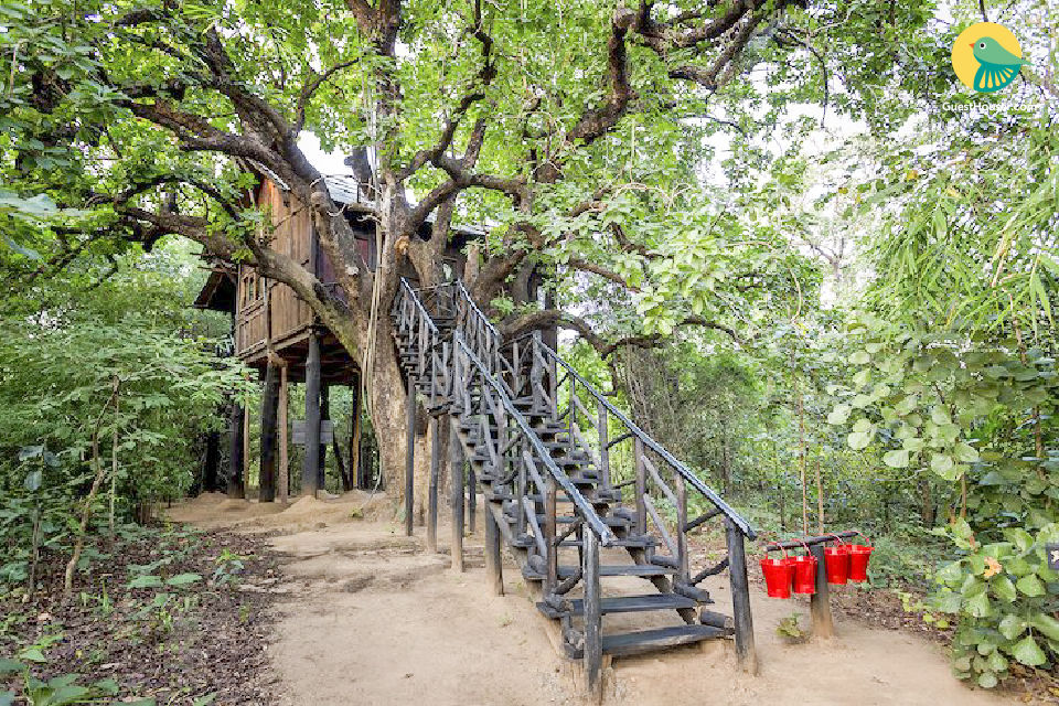 Treehouse for a couple