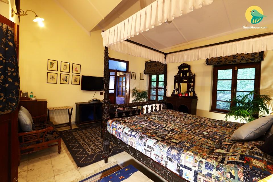 Magnificent Niltava  (Blue room)